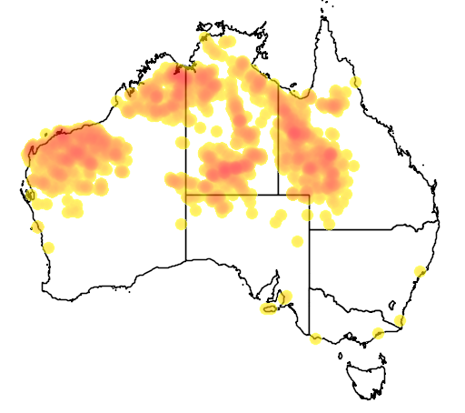 distribution map showing range of Geophaps plumifera in Australia