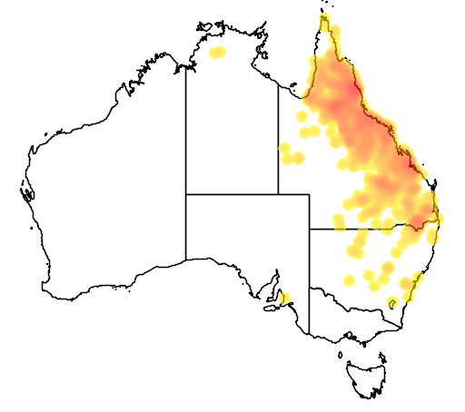 distribution map showing range of Geophaps scripta in Australia
