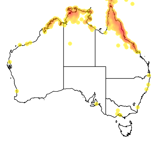 distribution map showing range of Gerygone magnirostris in Australia