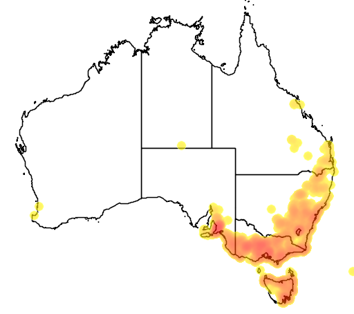 distribution map showing range of Glossodia major in Australia