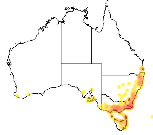 distribution map showing range of Goodia lotifolia in Australia