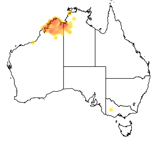 distribution map showing range of Grevillea agrifolia in Australia