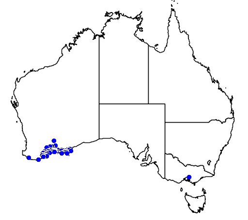 distribution map showing range of Grevillea concinna in Australia