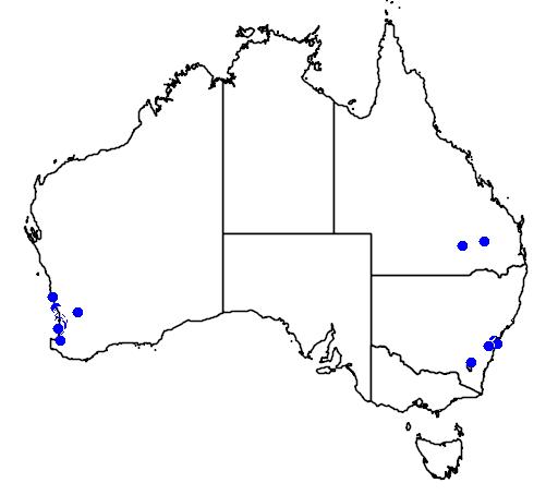 distribution map showing range of Grevillea crithmifolia in Australia