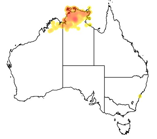 distribution map showing range of Grevillea decurrens in Australia