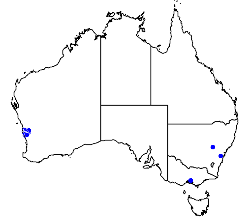 distribution map showing range of Grevillea thyrsoides in Australia