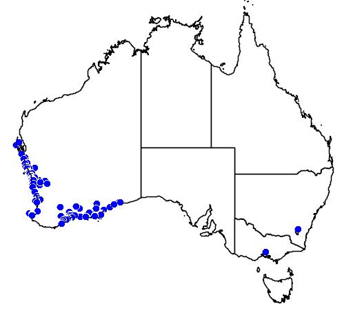 distribution map showing range of Guichenotia ledifolia in Australia