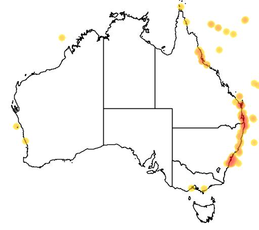 distribution map showing range of Gygis alba in Australia