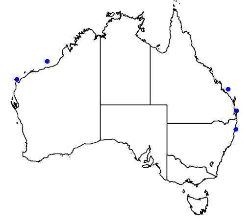Gymnothorax nudivomer