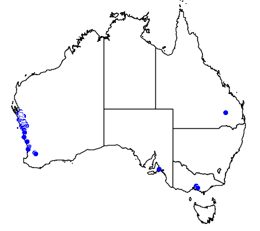 distribution map showing range of Hakea bucculenta in Australia