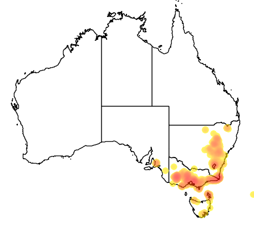 distribution map showing range of Hakea decurrens in Australia