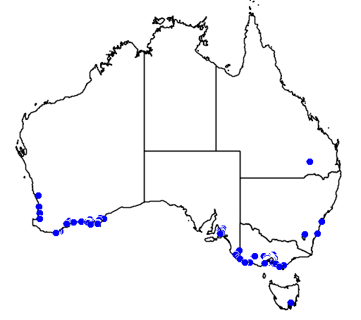 distribution map showing range of Hakea drupacea in Australia