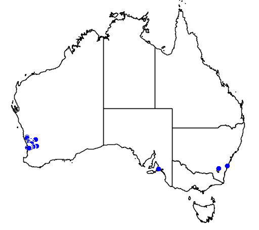 distribution map showing range of Hakea myrtoides in Australia