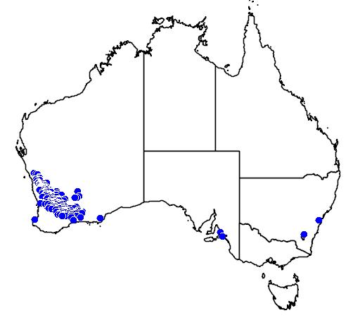 distribution map showing range of Hakea scoparia in Australia