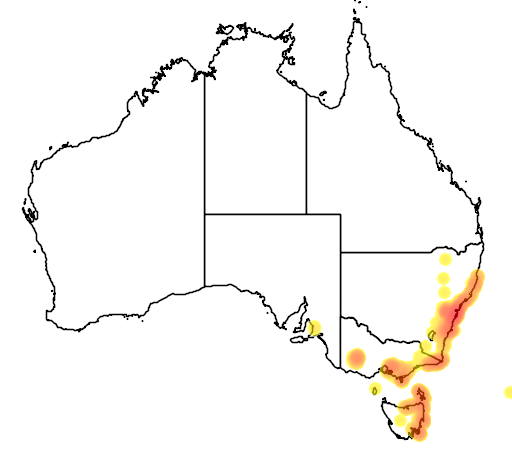 distribution map showing range of Hakea teretifolia in Australia