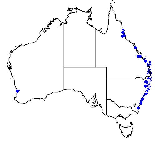 distribution map showing range of Hibiscus diversifolius in Australia
