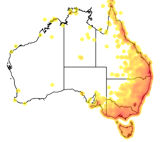 distribution map showing range of Hirundapus caudacutus in Australia