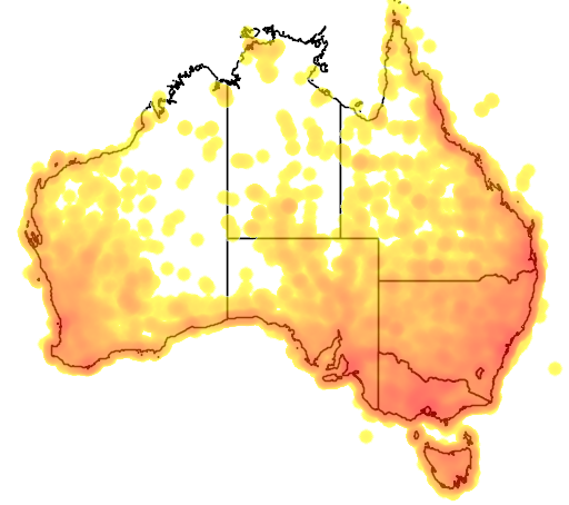 distribution map showing range of Hirundo neoxena in Australia