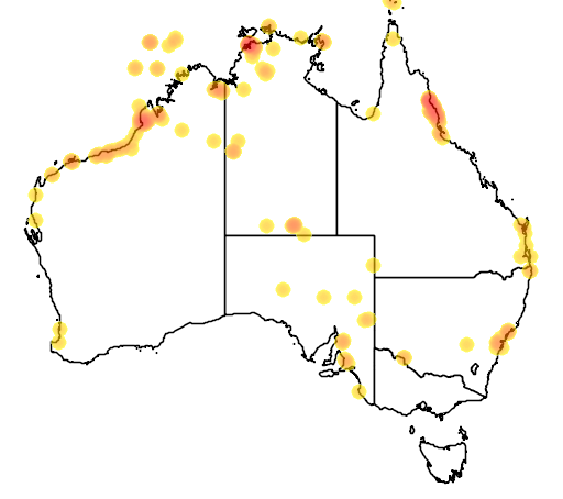 distribution map showing range of Hirundo rustica in Australia