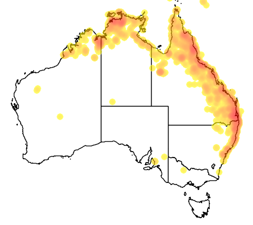 distribution map showing range of Hydrophasianus chirurgus in Australia