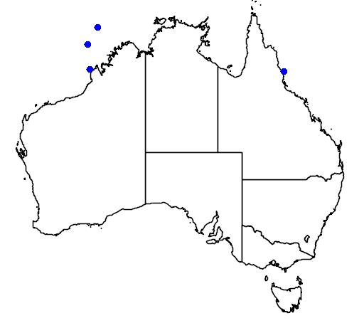 distribution map showing range of Hydrophis melanocephalus in Australia