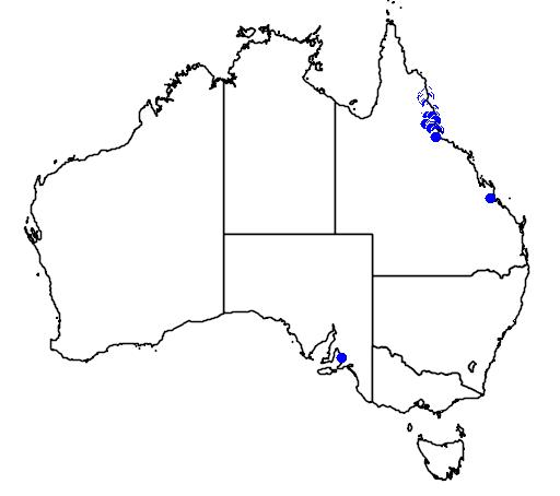 distribution map showing range of Hypsilurus boydii in Australia