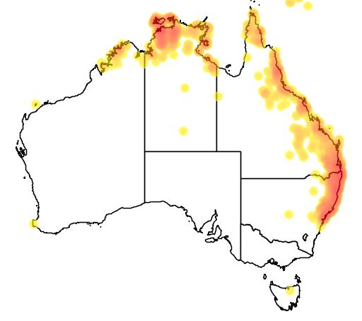 distribution map showing range of Isoodon macrourus in Australia