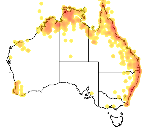 distribution map showing range of Ixobrychus flavicollis in Australia
