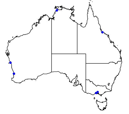 distribution map showing range of Larus crassirostris in Australia