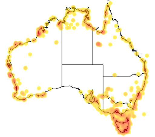 distribution map showing range of Larus novaehollandiae in Australia