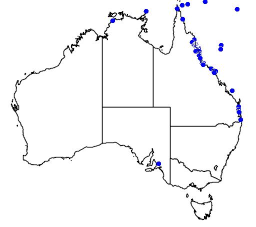 distribution map showing range of Lepidodactylus lugubris in Australia