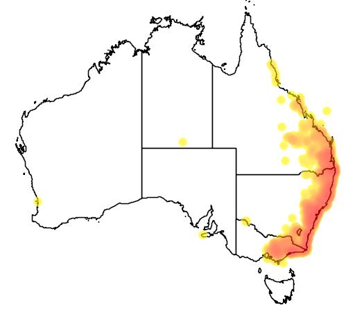 distribution map showing range of Leucosarcia melanoleuca in Australia