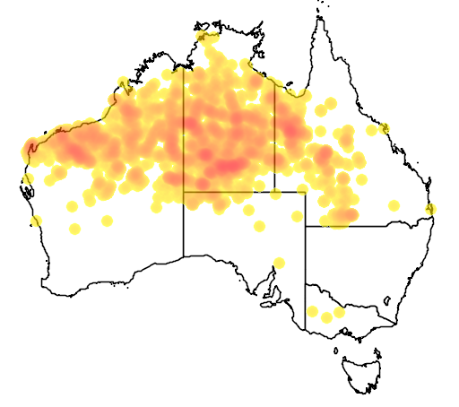 distribution map showing range of Lichenostomus keartlandi in Australia
