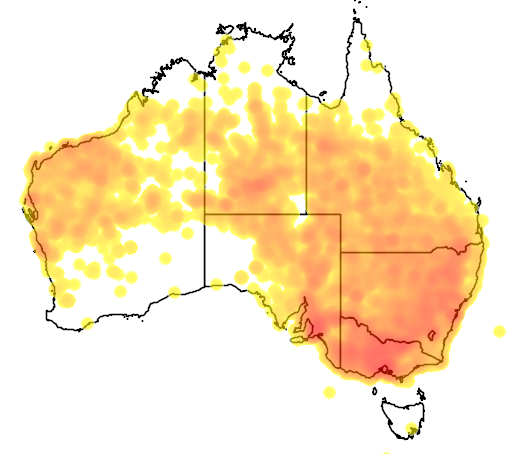distribution map showing range of Lichenostomus penicillatus in Australia