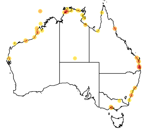 distribution map showing range of Limnodromus semipalmatus in Australia