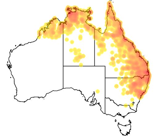 distribution map showing range of Limnodynastes ornatus in Australia