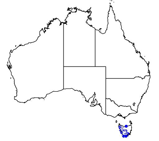distribution map showing range of Litoria burrowsae in Australia