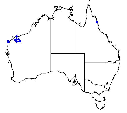 distribution map showing range of Livistona alfredii in Australia