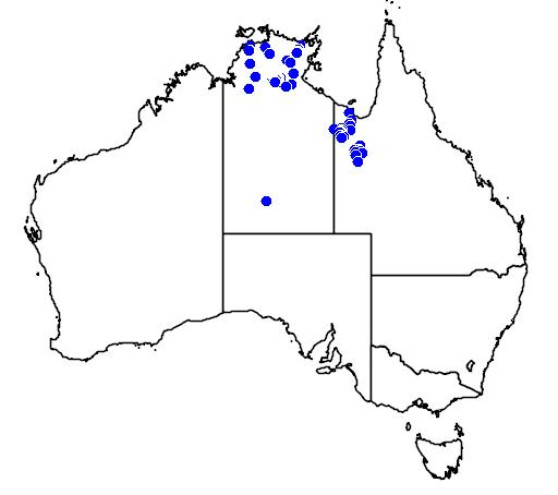 distribution map showing range of Livistona rigida in Australia