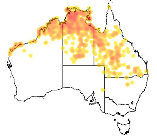 distribution map showing range of Lophognathus gilberti in Australia