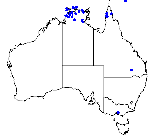 distribution map showing range of Lophognathus temporalis in Australia