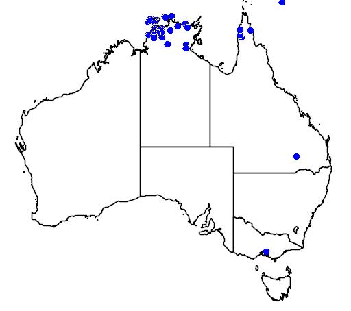 distribution map showing range of Lophognathus temporalis in Australia