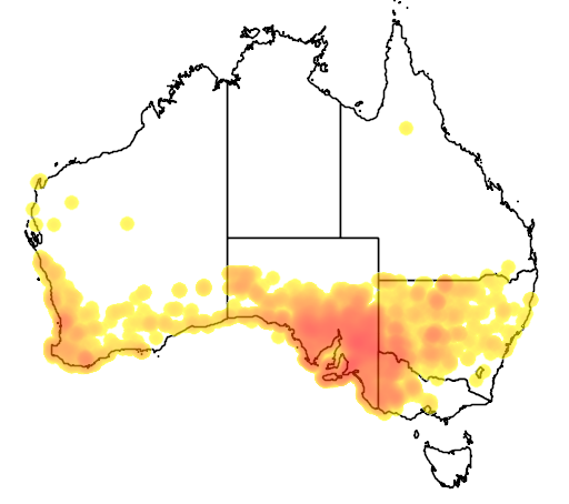 distribution map showing range of Macropus fuliginosus in Australia