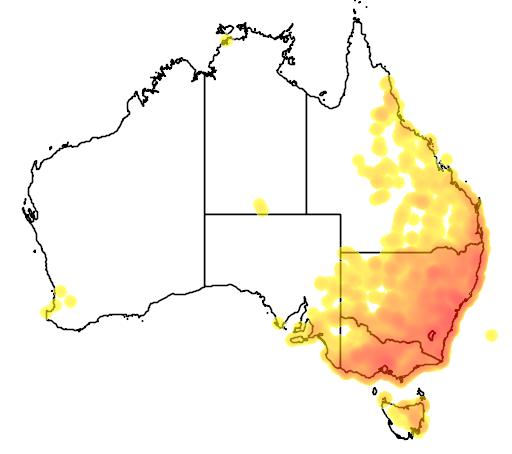 distribution map showing range of Macropus giganteus in Australia