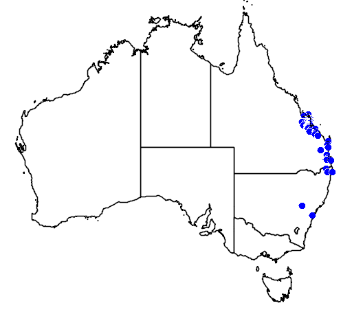 distribution map showing range of Macrozamia miquelii in Australia