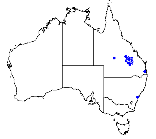 distribution map showing range of Macrozamia moorei in Australia