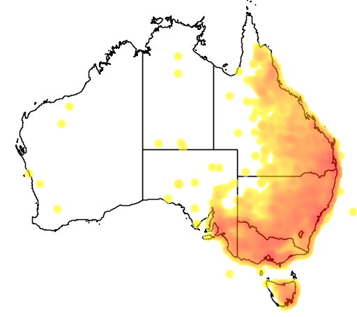 distribution map showing range of Manorina melanocephala in Australia