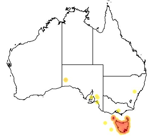 distribution map showing range of Melanodryas vittata in Australia