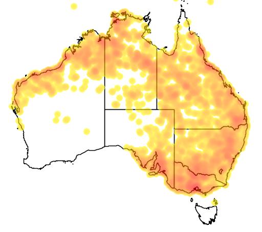 distribution map showing range of Mirafra javanica in Australia