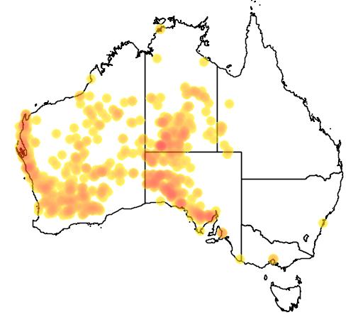 distribution map showing range of Moloch horridus in Australia